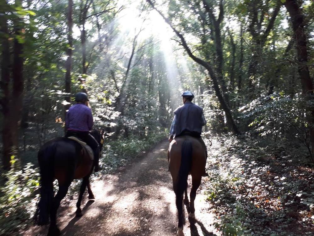 Paardrijden in de buurt van het terrein.