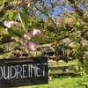 Appelboomgaard in de bloesem.