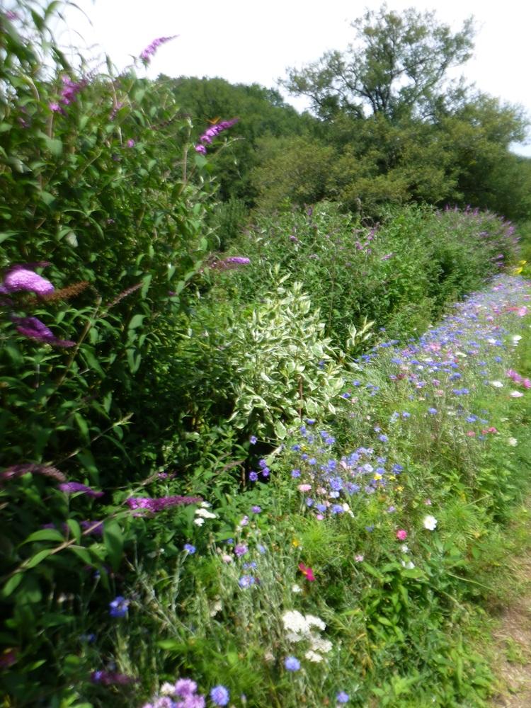 Moulin de Liort zorgt voor veel bloemen voor de vlinders en de bijen