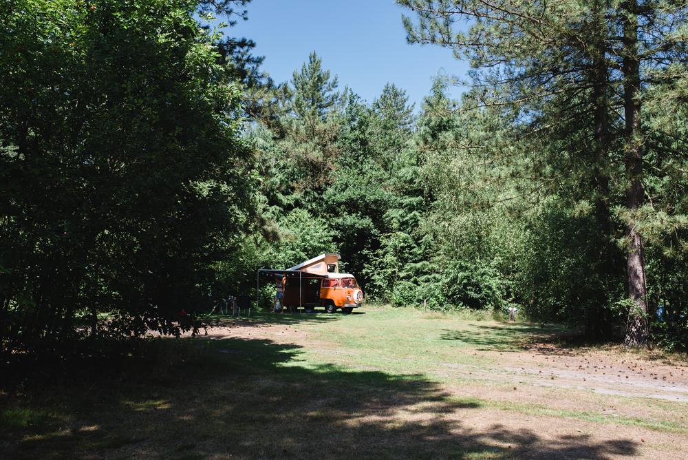 Een kampeerbusje in de schaduw van de naaldbomen, op het zonovergoten veld.