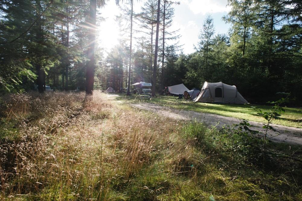 De zon schijnt door de bomen, heerlijk kamperen in het bos.