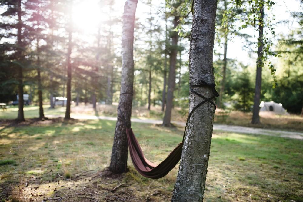 Met de hangmat het bos in.