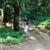 Spelende kinderen op het bospad.