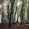 Bomen in Gelderland.