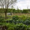 Biologische groenten en Natuurkampeerterrein vullen elkaar hier aan.