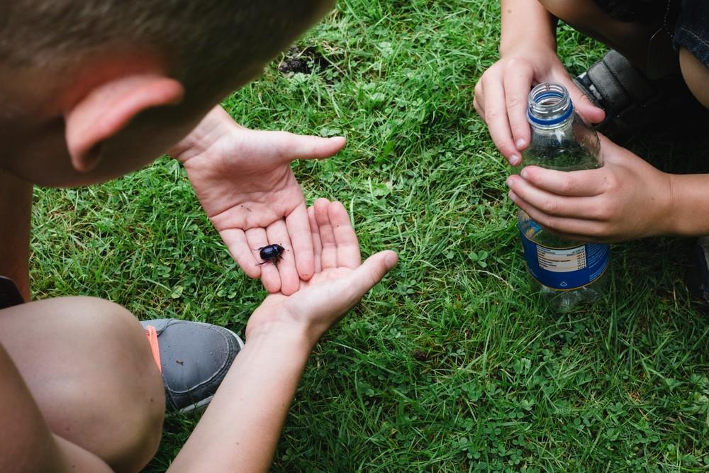 Kinderen op zoek naar insecten.