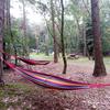 Hangmatten in het bos.