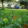 Campers tot 7 meter welkom in de boomgaard.