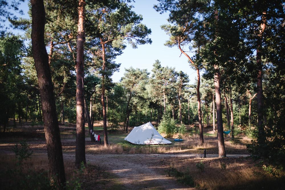 Kamperen in het naaldbomenbos.
