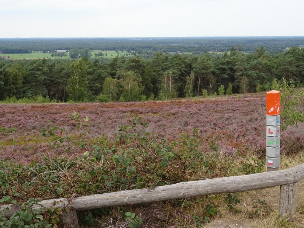 uitzicht vanaf hoogste punt Lemelerberg over bloeiende hei