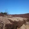afgravingen in de hei ten behoeve van de dieren op de Lemelerberg
