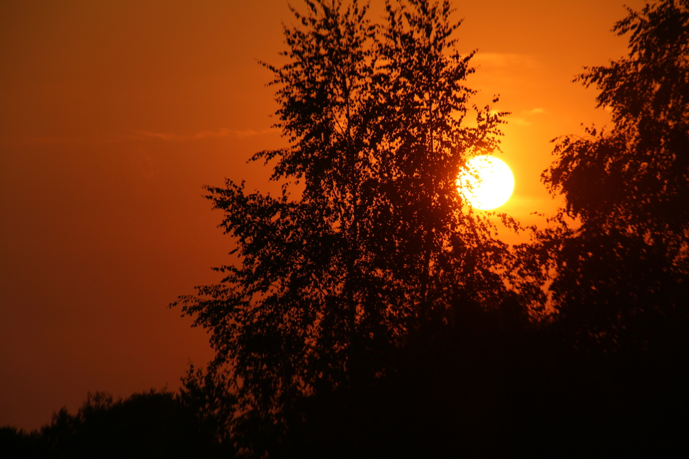 Zonsondergang door de bomen