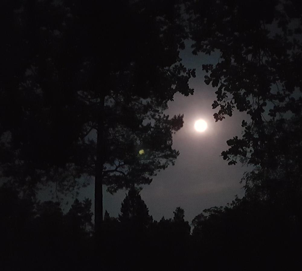 Zegenoord; waar de nacht nog echt pikkedonker is...