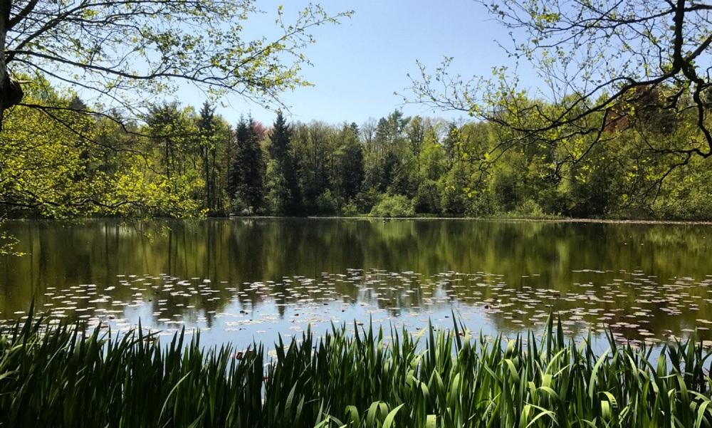 het meer op het terrein