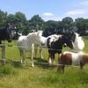 wei met paarden