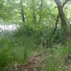 bomen aan de waterrand