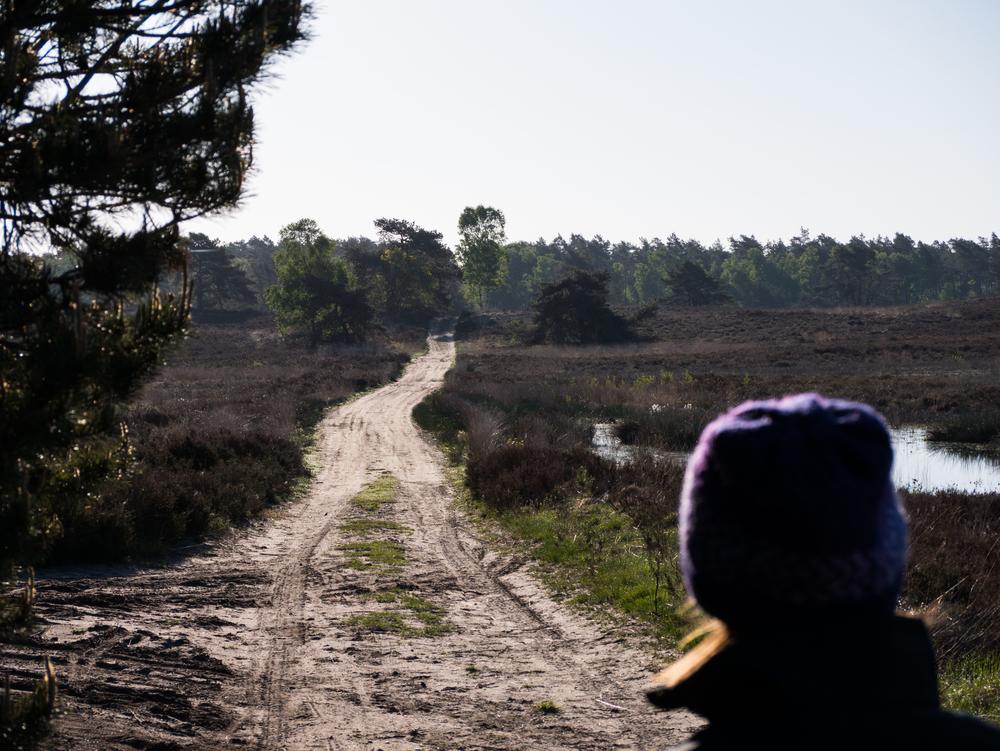 Heidepad in de omgeving