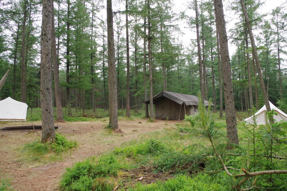 Groepstenten in het bos