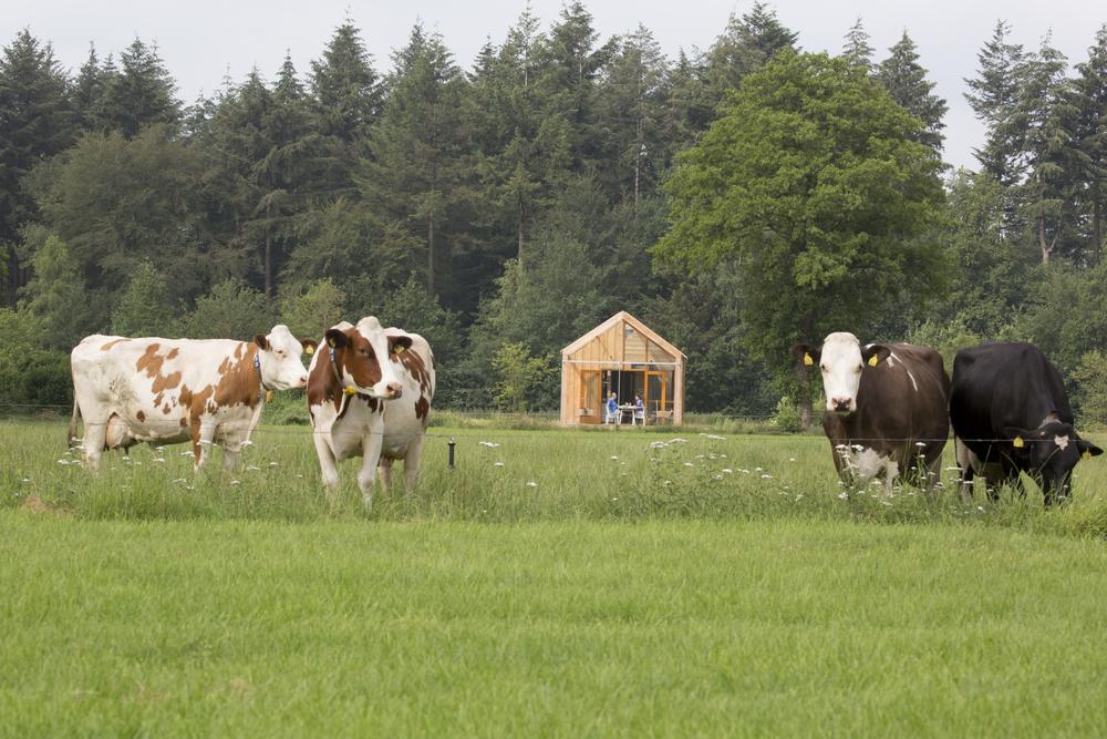 Uitzicht op de Skyte NatureLodge met de koeien op de voorgrond.