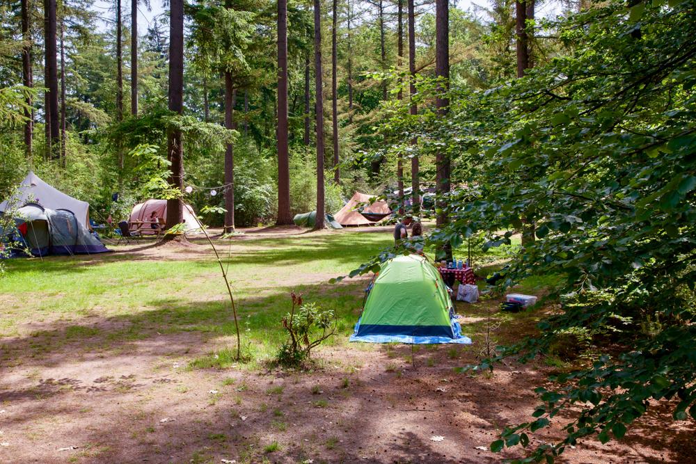 Kampeerplaatsen in het bos