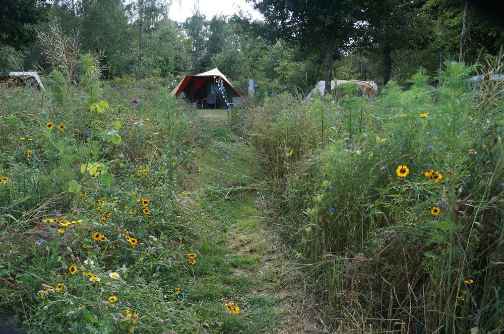 Tent in de bloemenweide