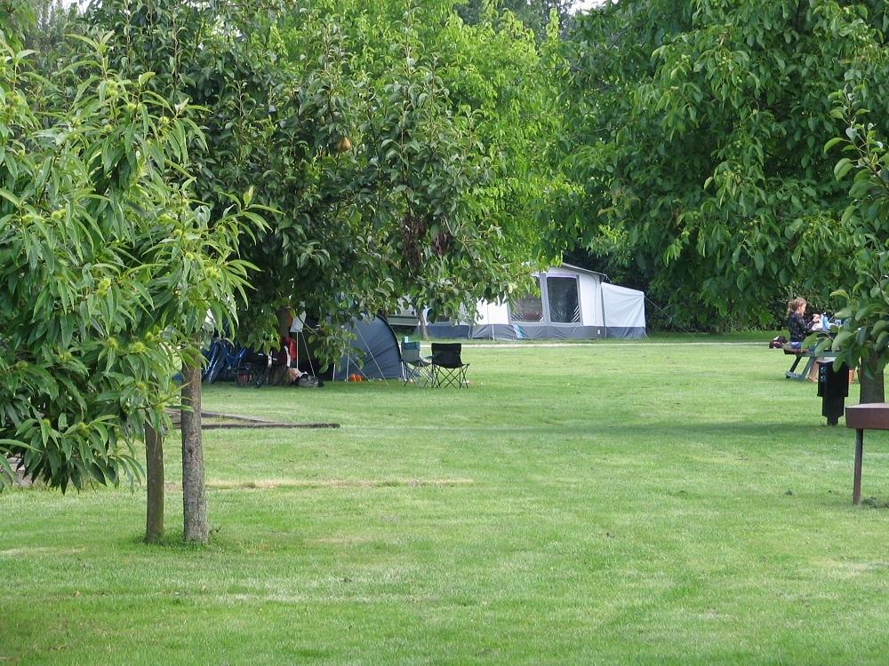 fruitbomen op het terrein
