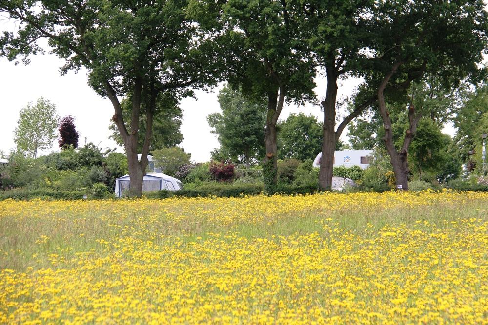 Caravans achter een veld met bloemen