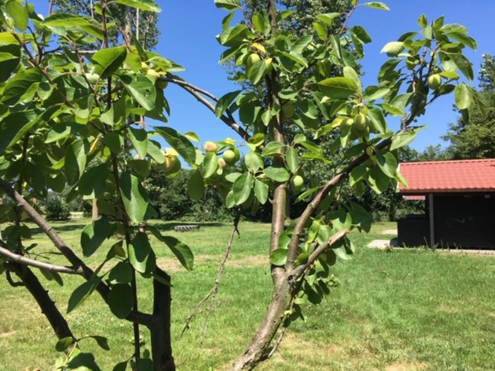 Fruitbomen tussen de kampeerplaatsen