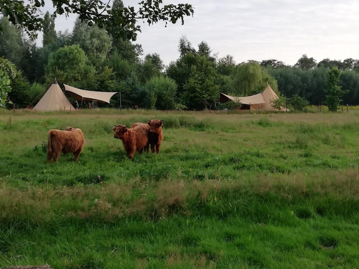 Tenten met uitzicht op open veld