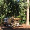 Caravan achter een boom
