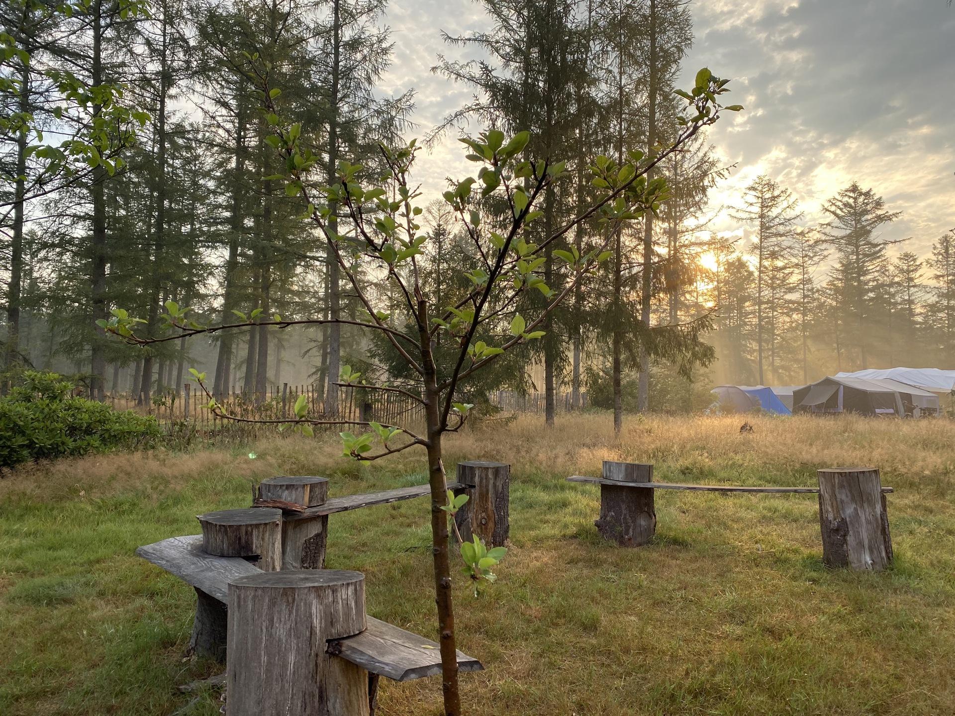 Zon komt op boven het trekkersveld gezien vanuit de boomgaard